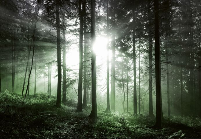 Photo wallpapers green forest scenery | Shop online